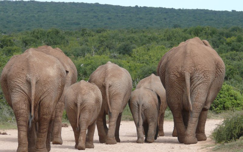 La Namibie, une destination de choix pour un voyage écologique JPEG